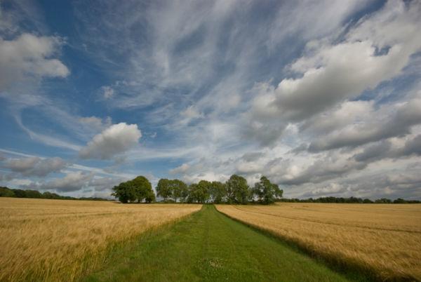 Field near Winchester