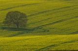 Hampshire Field