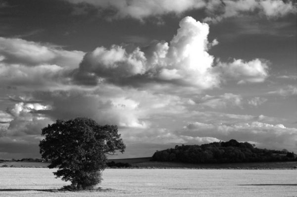 Hampshire Tree