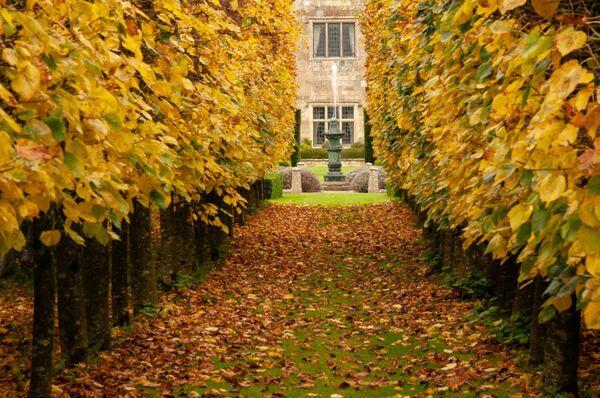 Hinton St Mary Manor House