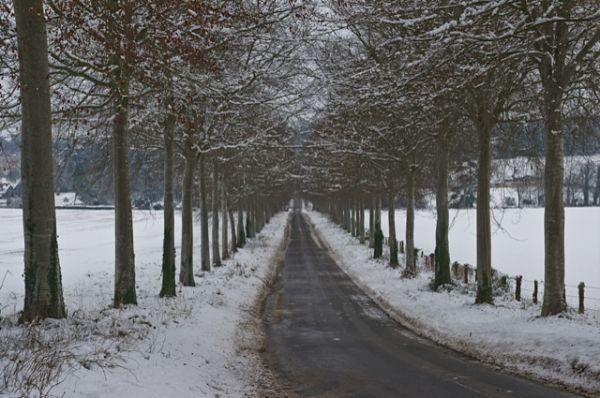 Moor Crichel Avenue