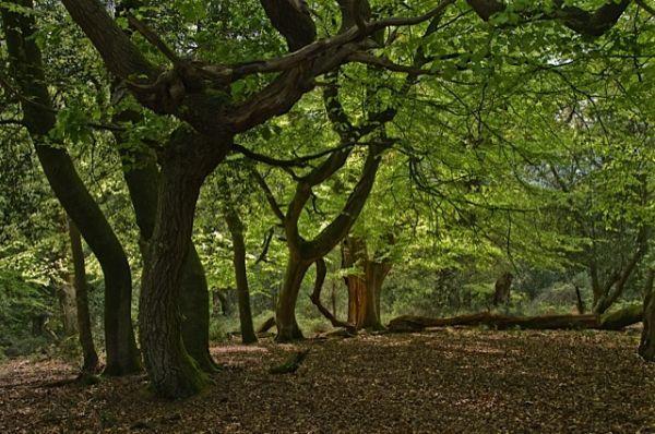Bramshaw Woods