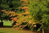 Upton Park
