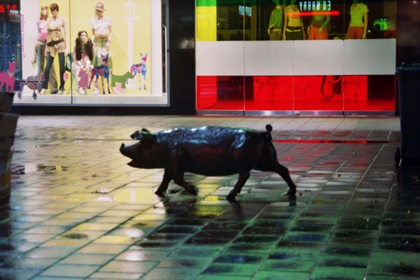 Rundle Mall - pig