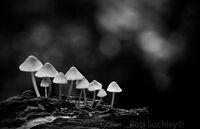 fungi at dusk
