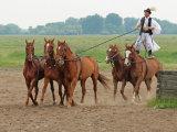 Magyar Hungarian Cowboys