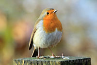 My Name is Robin