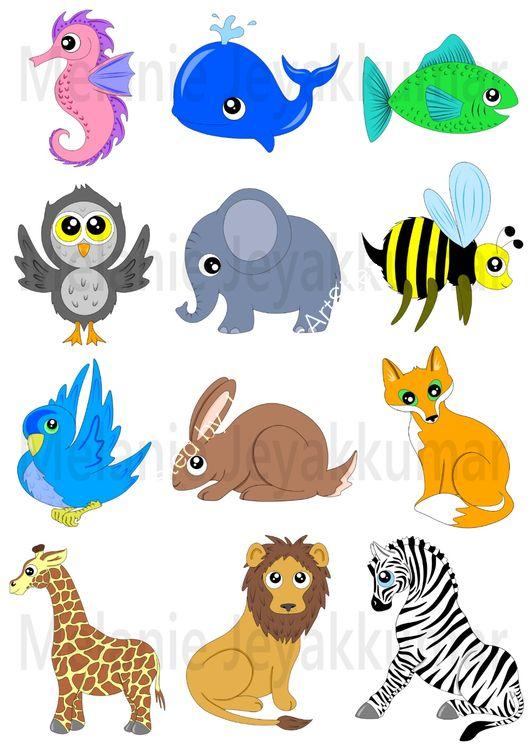 Animals colour