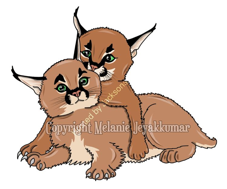 caracal kittens2
