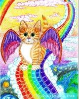 Rainbow Bridge Kitten