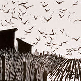 Birds & Barns