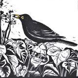 Blackbird on the Ivy