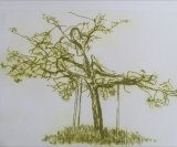 The Glastonbury Thorn 2