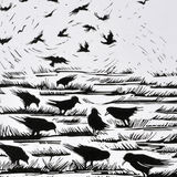 Rooks in the Field