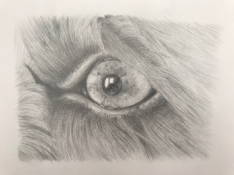 Graphite Molly eye