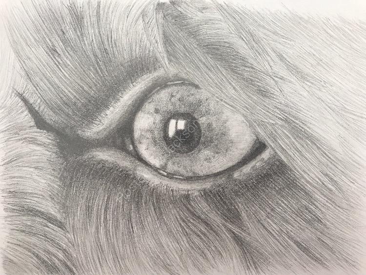 Graphite Molly eye detail