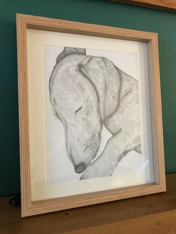 Graphite Odie framed 2