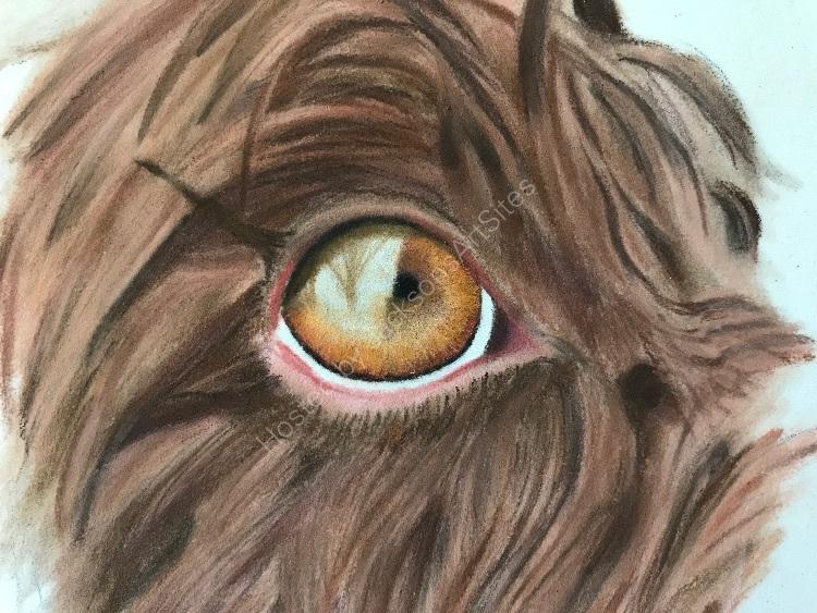 Pastel wet Molly eye