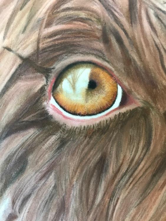 Pastel wet Molly eye detail