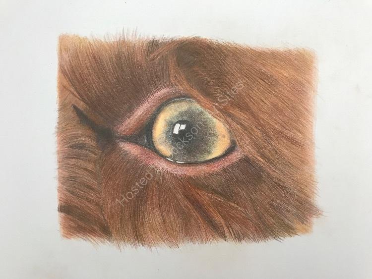 Pencil Molly eye