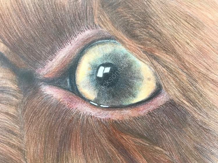 Pencil Molly eye detail