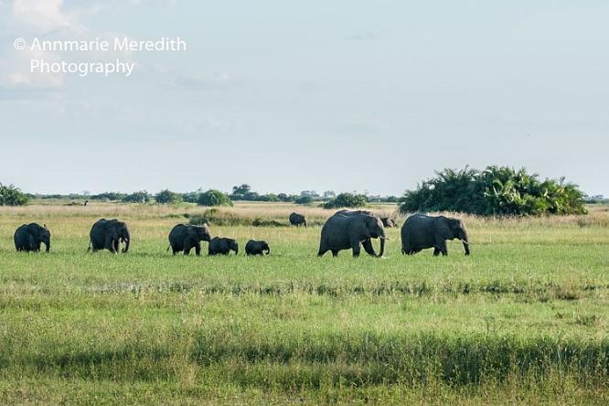 Parade of elephants