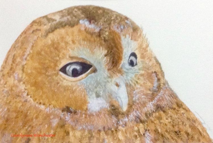Chloe - Tawny Owl