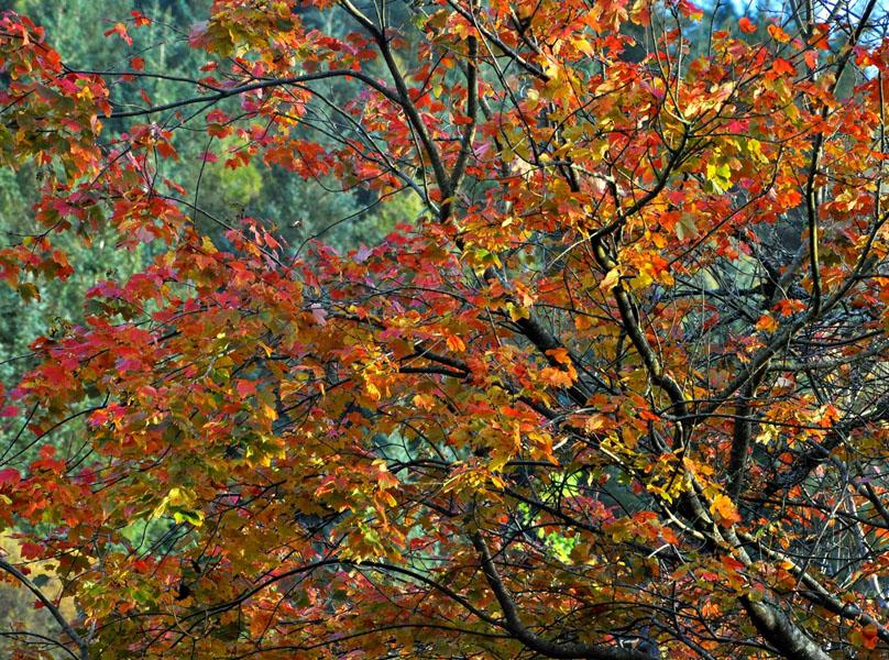 Autumn - Bill Baillie