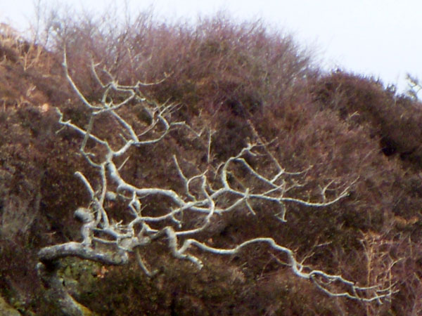 Trees in Skipness