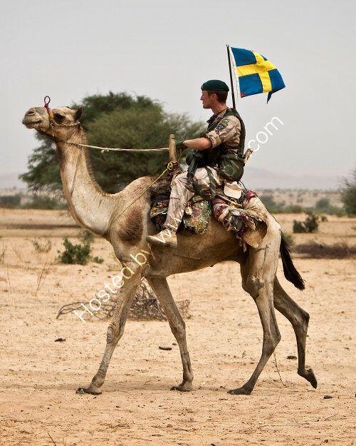 Camel Corp