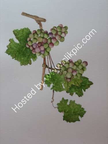 Grapes 12 x 10 in watercolour