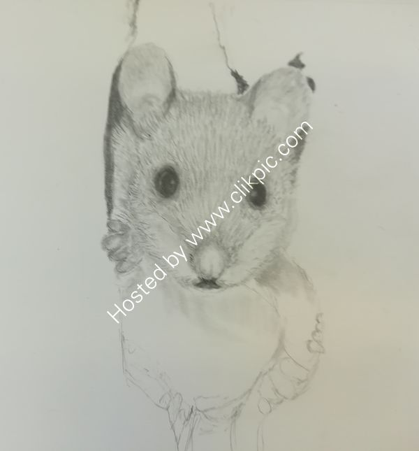 Week 1 -pencil drawing, shading, fur and feathers