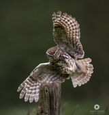British Birds photos by photographer Andy Howe