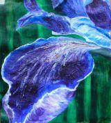 Iris - Georgia O'Keeffe Style