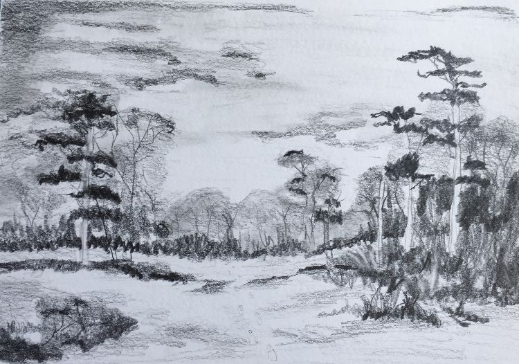 Additional Trees in graphite