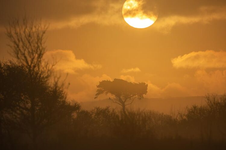 Sunrise over a lone tree