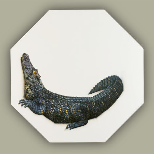 Room For The Caiman