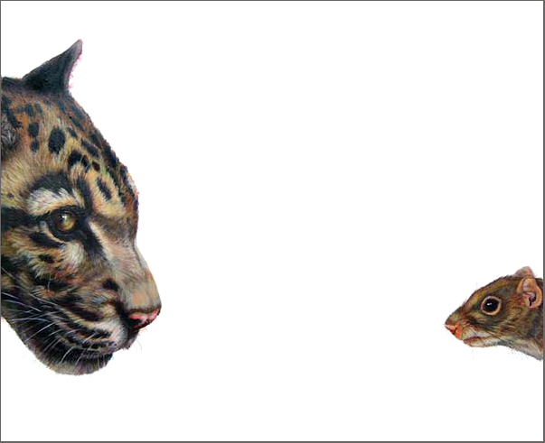 Top Predator - Clouded Leopard & Squirrel