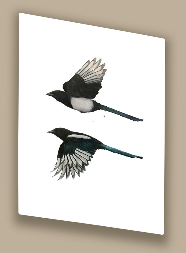 Increasing Magpies