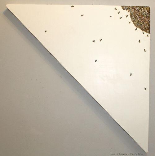Into a corner - Honeybees