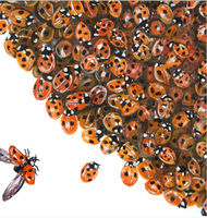 Into a Corner - Ladybirds (Detail)