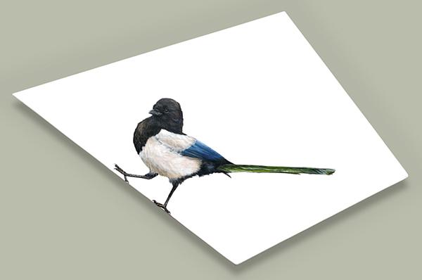 Strutting Magpie