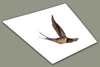 Swallow Fall