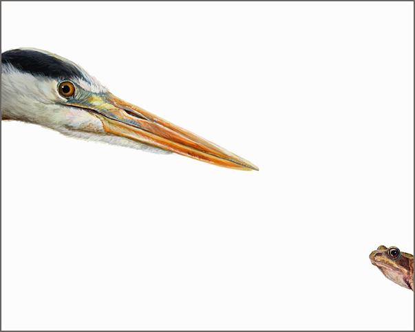 Top Predator - Heron & Frog