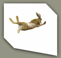 Tumbling Hare