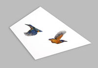 The Rise and Fall of Kingfishers