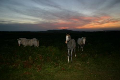Sunset Ponies