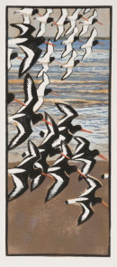 Oystercatchers woodcut