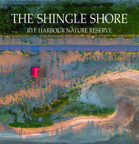 The Shingle Shore: Rye Harbour Nature Reserve