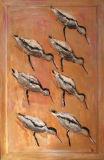 Avocets